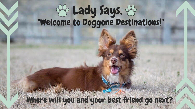 Doggone destinations solutioingenieria Choice Image